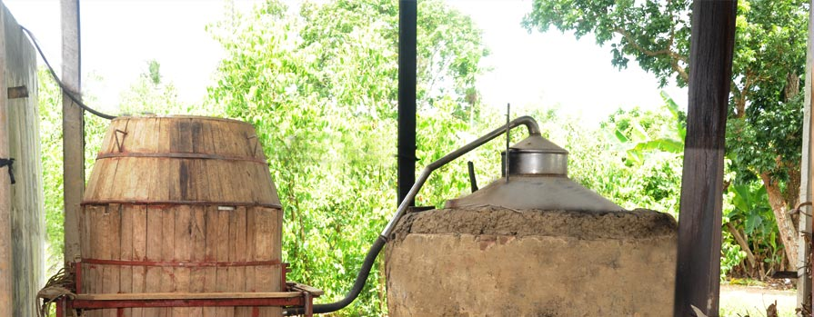 Cinnamon oil extractor in sri lanka